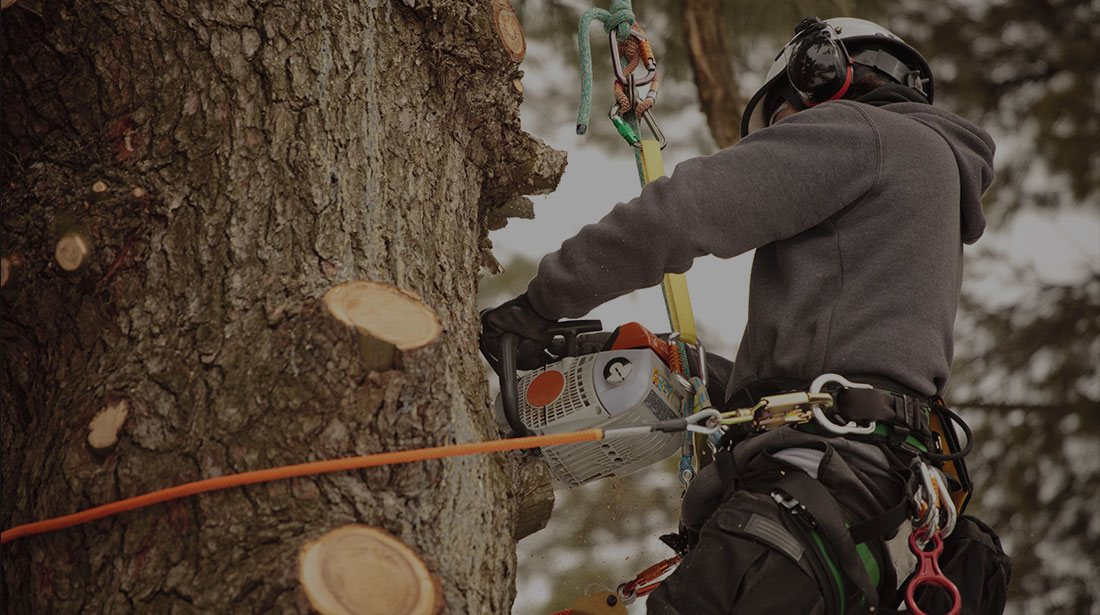 Top To Bottom Tree Services LLC: Stump and tree removal in Mount Mourne, Davidson and Cornelius