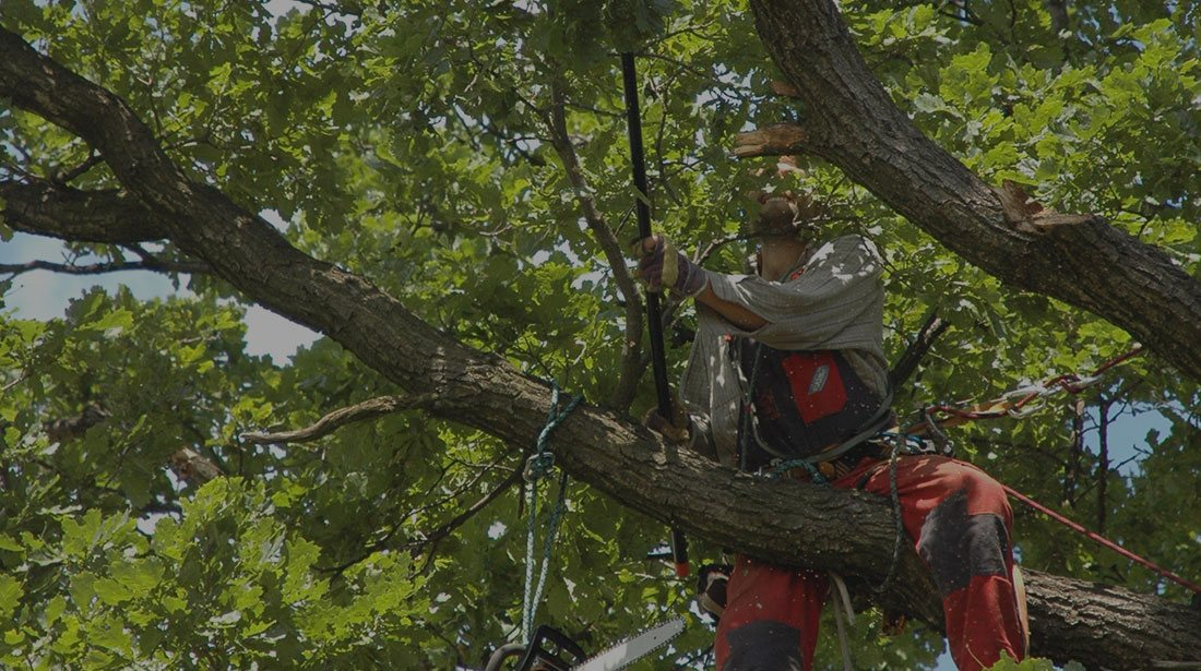 Top To Bottom Tree Services Llc Cabling And Bracing In Mount Mourne Davidson