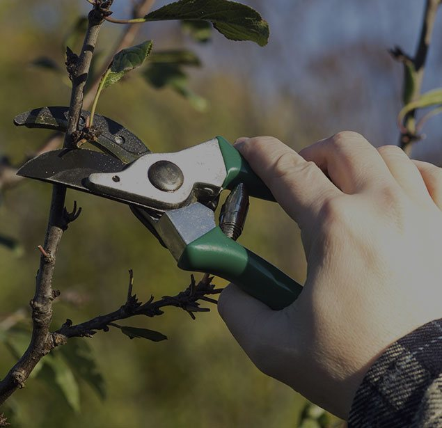 Top To Bottom Tree Services LLC: Tree pruning in Mount Mourne, Davidson and Cornelius